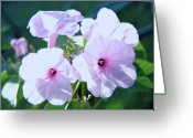 Kevin W .smith Greeting Cards - Morning Glory Greeting Card by Kevin Smith