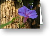 Morning Glory Greeting Cards - Morning Glory Vine On A Tree Trunk Greeting Card by Anne Keiser