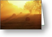 Missouri Greeting Cards - Morning Gold Sunlight Greeting Card by Heather Black