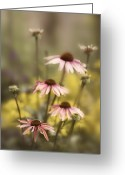Cone Flower Greeting Cards - Morning in the Garden Greeting Card by Rebecca Cozart