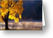 Lake Photographs Greeting Cards - Morning Maple ll Greeting Card by Rob Travis