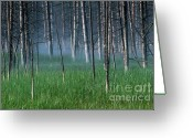 Geothermal Greeting Cards - Morning Mist in Yellowstone Greeting Card by Sandra Bronstein