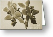 Sepia Toned Greeting Cards - Morning Orchid Greeting Card by Ben and Raisa Gertsberg