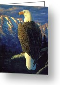 Eagle Art Greeting Cards - Morning Quest Greeting Card by Crista Forest