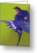 Stretch Pastels Greeting Cards - Morning Ritual barn swallow Greeting Card by Tracy L Teeter