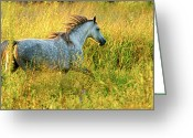 Running Horse Greeting Cards - Morning Run Greeting Card by Ron  McGinnis