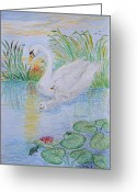 Pads Drawings Greeting Cards - Morning swim I  Original Colored pencil drawing Greeting Card by Debbie Portwood