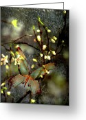 Li Van Saathoff Greeting Cards - Mornings moth on apple blossom Greeting Card by Li   van Saathoff