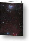 Horsehead Greeting Cards - Mosaic Of Orion Nebula And Horsehead Greeting Card by Philip Hart