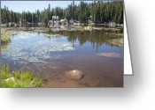 Calaveras Greeting Cards - Mosquito Lake Greeting Card by Peter Dyke