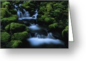 Olympic National Park Greeting Cards - Moss-covered Rock Surrounding Greeting Card by Melissa Farlow