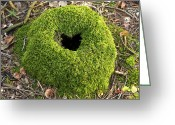Tree-covered Greeting Cards - Moss Covered Tree Stump Greeting Card by Jeremy Walker