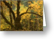 Ghostly Greeting Cards - Moss Covered Tree Yosemite NP California  Greeting Card by Robert Dayton