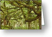 Tree-covered Greeting Cards - Moss-covered Trees Greeting Card by David Nunuk