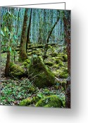 Rain Forrest Greeting Cards - Moss in the Wood Greeting Card by Diana Dearen