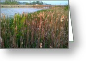 Unlimited Gold Greeting Cards - Moss Landing Washington North Carolina Greeting Card by Joan Meyland