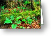 Puerto Rico Greeting Cards - Moss on Fallen Tree and Ferns Greeting Card by Thomas R Fletcher
