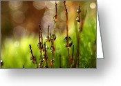 Dew Drops Greeting Cards - Moss Sparkles Greeting Card by Sharon Johnstone
