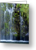 Sacramento River Greeting Cards - Mossbrae Greeting Card by Loree Johnson