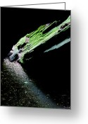Dark Moss Green Photo Greeting Cards - Mossy Cave Greeting Card by Adam Pender