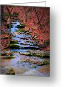 "\\\\\\\""boone County Photo Greeting Cards - Mossy Creek Greeting Card by Cricket Hackmann"