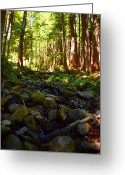 Clods Greeting Cards - Mossy Creek Greeting Card by Jim Moore