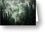 Live Art Greeting Cards - Mossy Dream Greeting Card by Carol Groenen