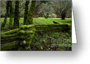 Cedar Fence Greeting Cards - Mossy Fence 2 Greeting Card by Bob Christopher