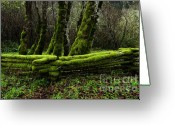 Split-rail Fence Greeting Cards - Mossy fence 3 Greeting Card by Bob Christopher