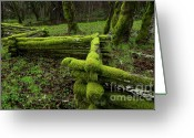 Cedar Fence Greeting Cards - Mossy Fence 4 Greeting Card by Bob Christopher