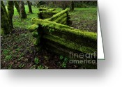 Cedar Fence Greeting Cards - Mossy Fence 5 Greeting Card by Bob Christopher