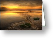 Seaview Greeting Cards - Mossy Rocks Greeting Card by Svetlana Sewell