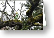 Old Tree Trunk Photo Greeting Cards - Mossy Tree Greeting Card by Tanya  Searcy