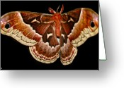 Vibrent Colored Landscape Greeting Cards - Moth Red Wings Greeting Card by Debra     Vatalaro