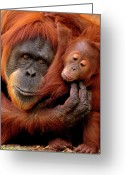 Animal Head Greeting Cards - Mother And Baby Greeting Card by Andrew Rutherford  - www.flickr.com/photos/arutherford1