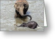 Trunk Greeting Cards - Mother and baby Greeting Card by Jane Rix