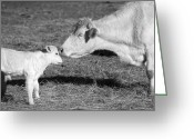 Digital-photography Photo Greeting Cards - Mother and Child Greeting Card by Steven  Michael