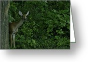 Rudolph Greeting Cards - Mother Deerest watching her fawn Greeting Card by LeeAnn McLaneGoetz McLaneGoetzStudioLLCcom