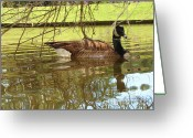 Wild Goose Greeting Cards - Mother Goose Greeting Card by Laura Brightwood