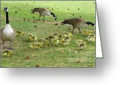 Mother Goose Mixed Media Greeting Cards - Mother Goose with Baby Goslings Greeting Card by Photography Moments - Sandi