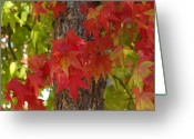 Red Leaves Greeting Cards - Mother Natures Style Greeting Card by Donna Blackhall