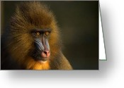 Monkey Greeting Cards - Mothers Finest Greeting Card by Photodream Art