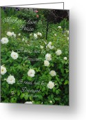 Robyn Stacey Photo Greeting Cards - Mothers Love is Peace White Roses Greeting Card by Robyn Stacey