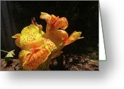 Canna Greeting Cards - Mottled Canna Lilly Greeting Card by Wayne Skeen