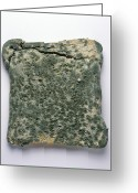 Spoiled Greeting Cards - Mouldy Bread Greeting Card by Cordelia Molloy