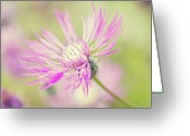 "Montana Greeting Cards - Mountain Cornflower Pink Greeting Card by ""Leentje photography"" by Helaine Weide"
