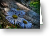 Santa Fe National Forest Greeting Cards - Mountain Daisies and a Downed Spruce Greeting Card by Aaron Burrows