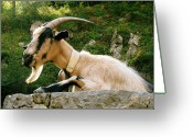 Chic Greeting Cards - Mountain Goat Greeting Card by Oliver Johnston