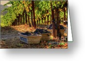 Fall Photographs Greeting Cards - Mountain Harvest Greeting Card by Mars Lasar