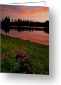 Lupine Greeting Cards - Mountain Heather Reflections Greeting Card by Mike  Dawson